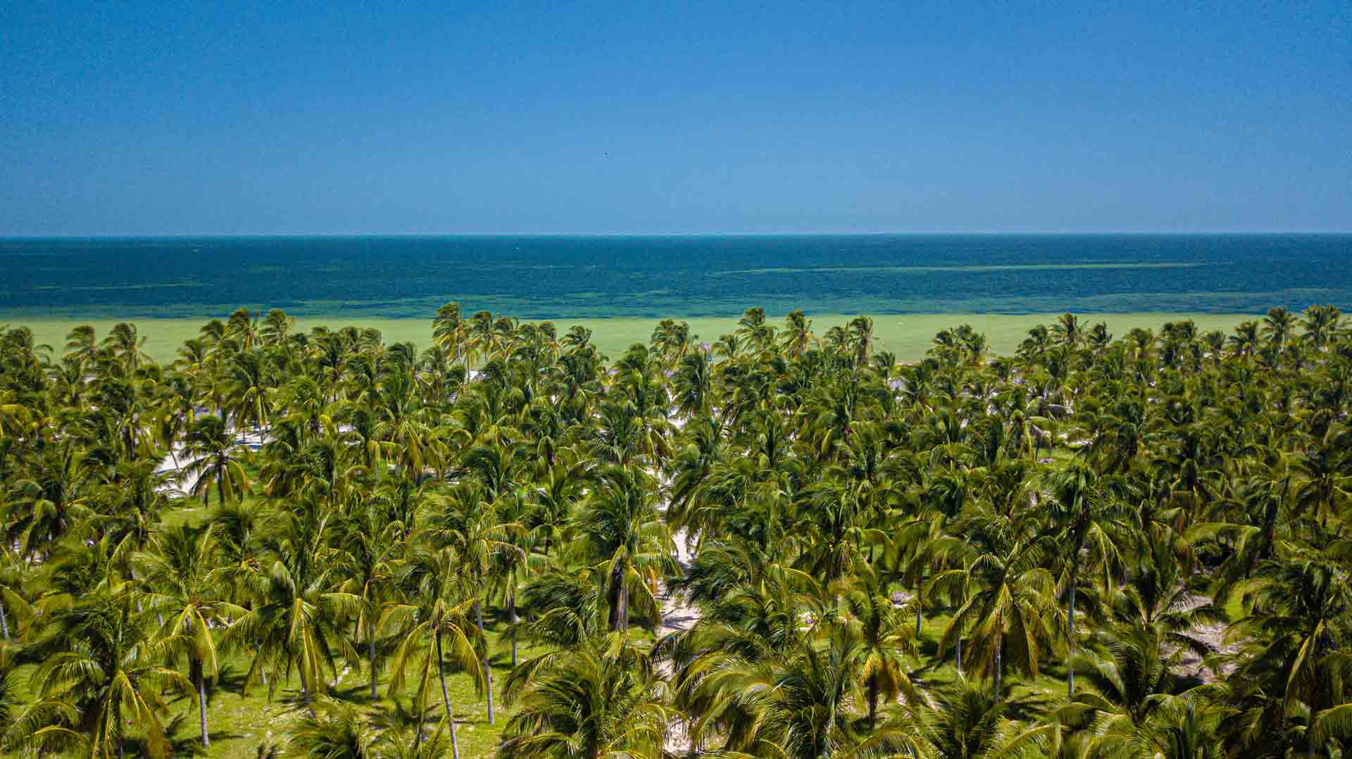 Servicios de Playa Sac-Ha en San Crisanto